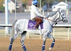 "Silver Timber will flash his speed in the Breeders' Cup Turf Sprint.<br><a target=""blank"" href=""http://www.bloodhorse.com/horse-racing/photo-store?ref=http%3A%2F%2Fpictopia.com%2Fperl%2Fgal%3Fprovider_id%3D368%26ptp_photo_id%3D9261676%26ref%3Dstory"">Order This Photo</a>"