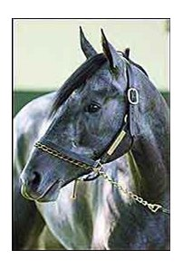 Giacomo, defied his 50-1 odds to win the 2005 Kentucky Derby.