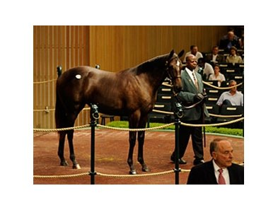 Hip 118 Dynaformer-Bank Audit was sold for $900,000 at the Keeneland Yearling Sales