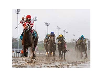 "Friesan Fire wins the Louisiana Derby in the slop. <br><a target=""blank"" href=""http://www.bloodhorse.com/horse-racing/photo-store?ref=http%3A%2F%2Fgallery.pictopia.com%2Fbloodhorse%2Fgallery%2FS637712%2Fphoto%2F7901224%2F%3Fo%3D0"">Order This Photo</a>"