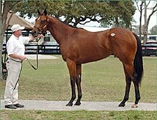 OBS March Juvenile Auction Gets Off  to Fast Start