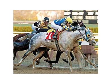 The venerable Evening Attire won the Stuyvesant in 2005.