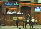Hip 261 sold for 275,000 at OBS