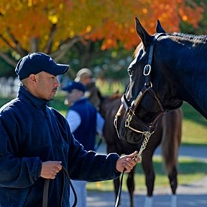 Gross, average, and median all increase in Keeneland November sale's 12th session.