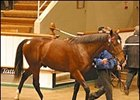 Sadler's Wells colt, topped yearling portion of Tattersalls December sale, which began Nov. 21.