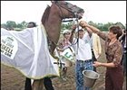 Kentucky Derby winner Funny Cide is given a bath by assistant trainer Robin Smullen after the Haskell.