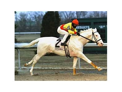 Patchen Prince at Turfway Jan. 18