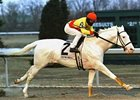 White Horse Wins at Turfway