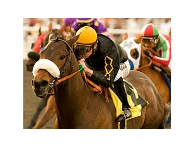 "Papa Clem won the San Fernando on Jan. 16.<br><a target=""blank"" href=""http://www.bloodhorse.com/horse-racing/photo-store?ref=http%3A%2F%2Fpictopia.com%2Fperl%2Fgal%3Fprovider_id%3D368%26ptp_photo_id%3D8758024%26ref%3Dstory"">Order This Photo</a>"