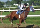 Belmont winner Summer Bird working at Saratoga on August 22.
