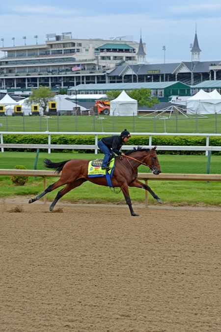 American Pharoah works at Churchill Downs April 26, 2015, in Louisville, KY.
