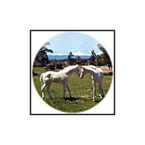 Two white horses are displayed on Painted Desert Farm's Web site.