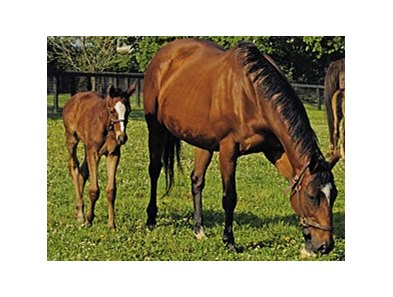 Aurora with her 2005 Empire Maker filly, future grade I winner Acoma.