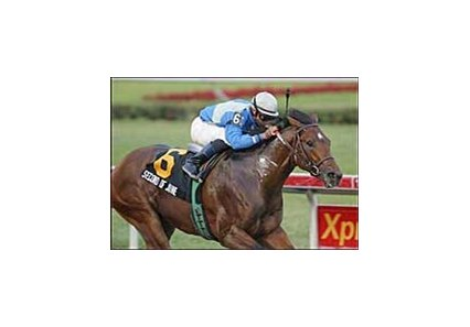 Holy Bull winner Second of June has been euthanized following a training injury suffered Wednesday morning.