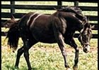 Wild Again romps in his paddock at Three Chimneys Farm.
