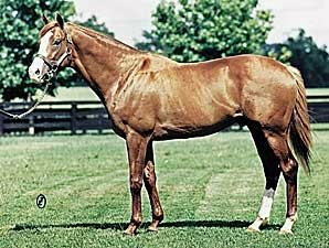Cigar's Sire Palace Music Dead