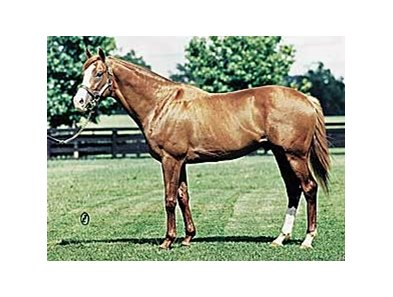 Palace Music, sire of Cigar