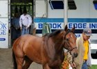Mine That Bird arriving at Belmont Park.