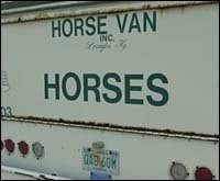Florida Officials Tracking Requests for Horse Shipments; Van Companies Busy