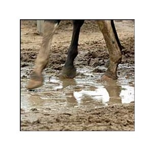 Mud at Monmouth Park.