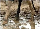 Racing Officials, Trainers Prepare for Wet Breeders' Cup