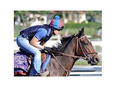 Zilva finished 7th in her most recent start, the Breeders' Cup Juvenile Fillies.