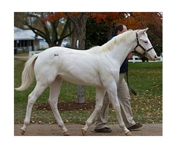 Top-priced weanling; Arctic Bright; white colt, Painting Freedom - Mesa Queen by Reign Road.
