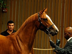Lunsford Buys Out Sikura in A.P. Indy Filly
