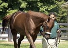 Smarty Jones, arriving at Three Chimneys Farm last year.