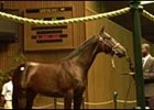 Saint Ballado colt brought 2001 top yearling price of $4-million.