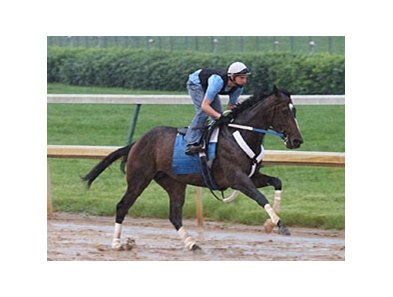 Rachel Alexandra works at Churchill Downs on May 25.