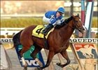 "Discreet Cat remained undefeated after this record win in the Cigar Mile.<br><a target=""blank"" href=""http://www.bloodhorse.com/horse-racing/photo-store?ref=http%3A%2F%2Fpictopia.com%2Fperl%2Fgal%3Fprovider_id%3D368%26ptp_photo_id%3D669964%26ref%3Dstory"">Order This Photo</a>"