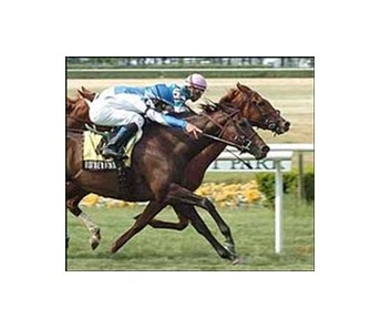 "Bit of Whimsy, inside, and Rutherienne finish in a dead heat in the Sands Point Stakes, Saturday at Belmont Park.<br><a target=""blank"" href=""http://www.bloodhorse.com/horse-racing/photo-store?ref=http%3A%2F%2Fpictopia.com%2Fperl%2Fgal%3Fprovider_id%3D368%26ptp_photo_id%3D1327365%26ref%3Dstory"">Order This Photo</a>"
