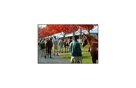 Horses scrutinized by prospective buyers at Keeneland.