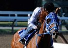 Summer Bird Posts Travers Work