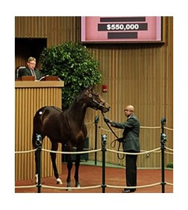 Hip 213, a colt by Giant's Causeway, was sold for $550,000 during the 2nd session of the Keeneland September Yearling Sale.