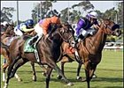 Graded Winner Osidy to Spendthrift