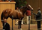Society Selection, hip 43, at the Keeneland November sale.