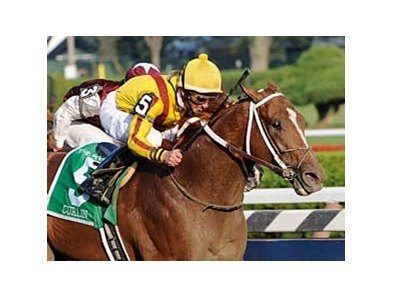 Curlin takes aim at Cigar's all-time earnings record in the Jockey Club Gold Cup Invitational.