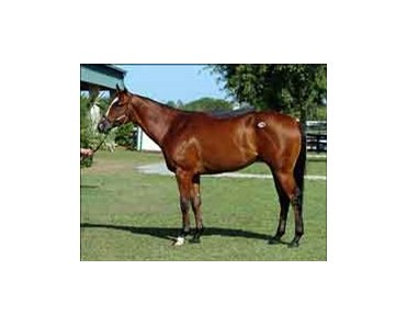 Songandaprayer colt Lake Island tops OBSC sale on next to last day.