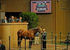 Lucky One, the dam of 2010 Kentucky Oaks winner  Blind Luck, sold for $1.85 million Nov. 9 at the Keeneland November breeding stock sale in Lexington.