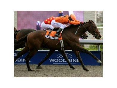 Bear Tough Guy battles to win the Grey Stakes at Woodbine.