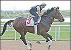 Pleasantly Perfect, on the track at Nad Al Sheba Monday as he prepared for the Dubai World Cup.