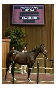 Storm Cat colt, sold for a Keeneland fall sale record price of $9.7 million.