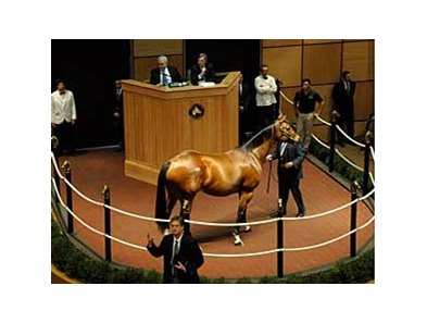 Madcap Escapade brings $3.1 million at Fasig-Tipton on Nov. 2.