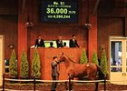 Hip 51 from the Japan Select Yearling Sale.