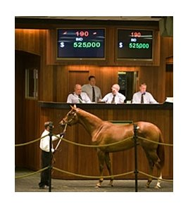Filly; More Than Ready - Meadow Silk by Meadowlake, brought $525,000 during the first hour of the second session of the Ocala Breeders' Sales Co. March sale of 2-year-olds in training.