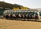 Santa Anita Delays Surface Decision