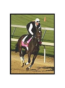Take Charge Lady, morning-line favorite for the Kentucky Oaks.
