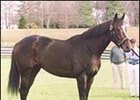 Tiznow, shown to the public at WinStar Farm.